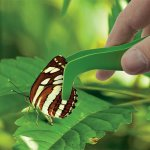 Набор натуралиста Edu-Toys Комплект исследователя 6 в 1 (BL128)